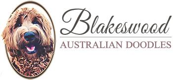 Blakeswood Australian Doodles